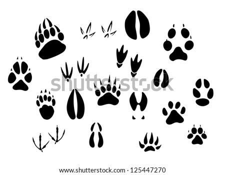Animal - birds and mammals - footprints silhouettes set isolated on white background, such as idea of logo. Jpeg version also available in gallery - stock vector