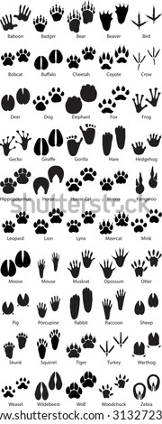 Animal Footprint Tracks - stock vector
