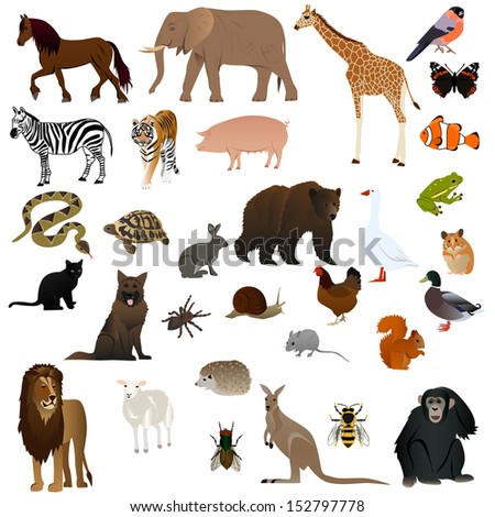 Animal set 1 - stock vector