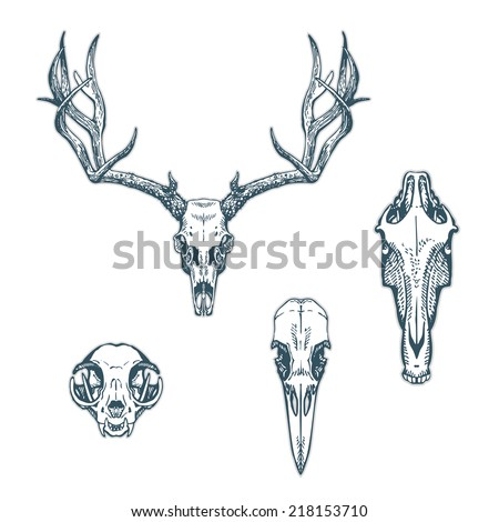 Animal skulls set isolated on white background. Deer, horse, cat, crow. Vector illustration, EPS 10. Contains transparent objects - stock vector