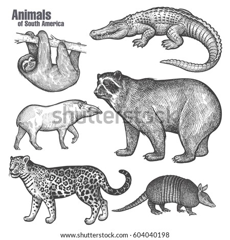 Armadillo Stock Images Royalty Free Images Vectors Shutterstock