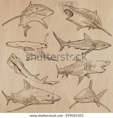 Animals - SHARKS, Chordata. Description - Hand drawn vectors, freehand sketching. Editable in layers and groups. Colored background is isolated.