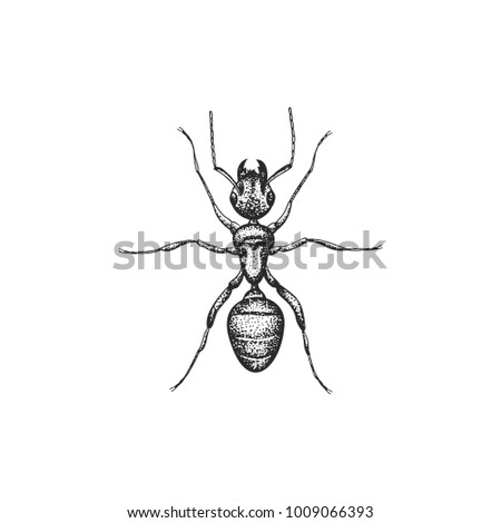 ant vector draw stock vector 1009066393 shutterstock