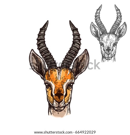 antelope african wild animal head muzzle stock vector 664922029 shutterstock. Black Bedroom Furniture Sets. Home Design Ideas