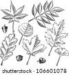 Antique etching style vector illustration of various tree leaves and acorns, isolated on white. - stock vector