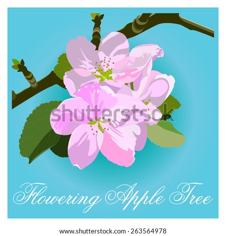 apple blossoms. Spring Apple-tree branch in bloom - stock vector