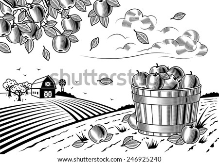 Apple harvest landscape black and white. Fully editable vector illustration with clipping mask. - stock vector
