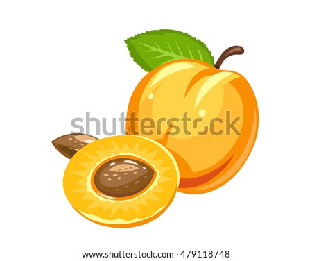 Apricot. Ripe juicy fruit with nut and leaf. Vector illustration. Isolated white background. Organic healthy food. Sweet natural peach. Vegetarian meal
