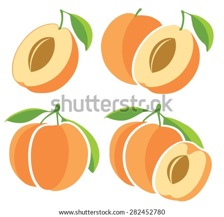 Apricots whole and halves, collection of vector illustrations - stock vector