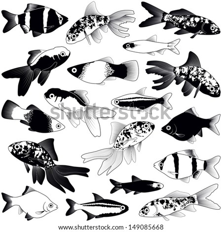 Aquarium fish collection - vector silhouette illustration  - stock vector