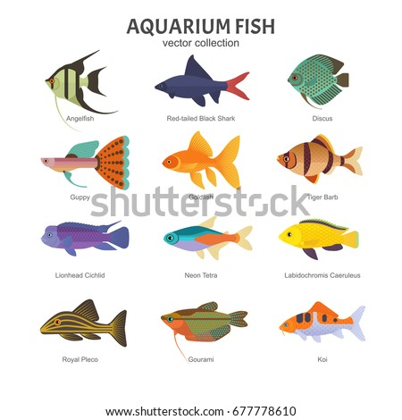 Different Kinds Of Fish Images