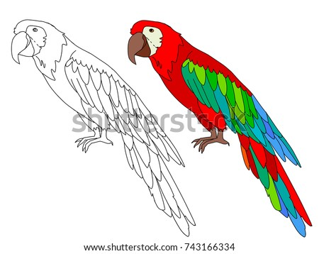 ara parrot cartoon page for coloring book line contour and sample coloring of parrot