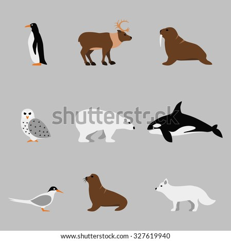 Arctic and antarctic animals set in flat vector style. Penguin and orca, owl and bear, walrus and deer illustration - stock vector