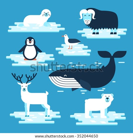 Arctic and Antarctic animals set, vector flat design illustration. Polar animals for infographic. White bear, penguin, musk-ox, blue whale, petrel, seal, reindeer. - stock vector