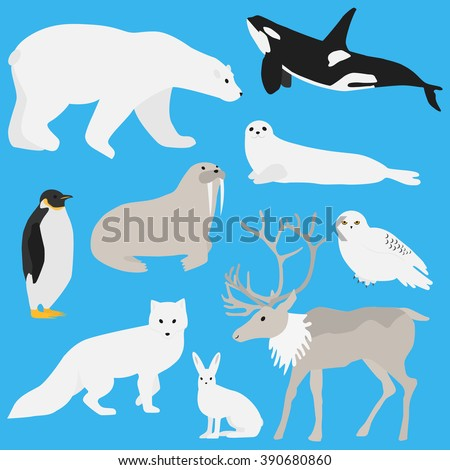 Arctic animals collection.Set of flat minimal vector illustrations of polar mammals and birds Penguin, seal, hare, snowy owl, bear, orca whale, fox, caribou, walrus.Cute cards for memory game.Drawing - stock vector