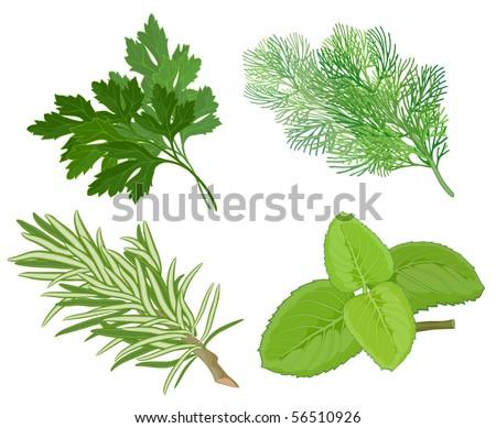 Aroma herbs. Vector. - stock vector