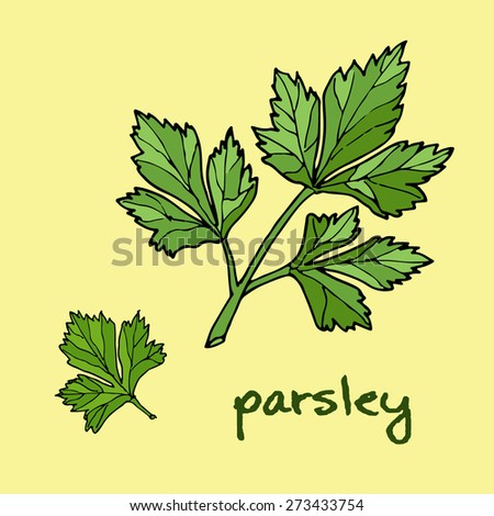 aromatic herbs, parsley