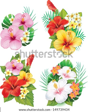 Arrangement from hibiscus flowers - stock vector