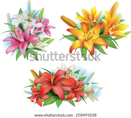 Arrangement from lilies flowers - stock vector