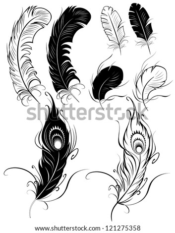 artistically painted feathers on a white background. - stock vector