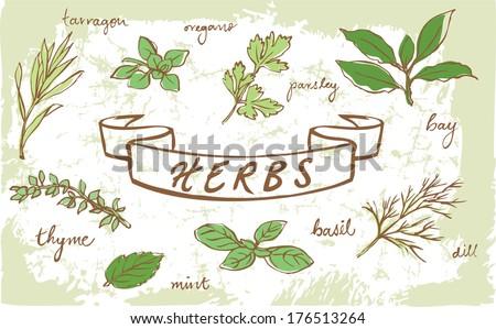 Assorted fresh herbs vector  - stock vector