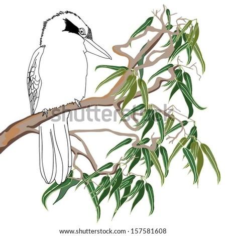Australian Kookaburra sitting on Branches - stock vector