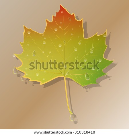 Autumn abstract leaf with water drops.Vector