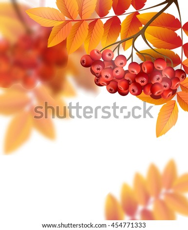 Autumn background with leavesand rowan berries