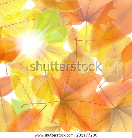Autumn background with maple leaves. plus EPS10 vector file - stock vector
