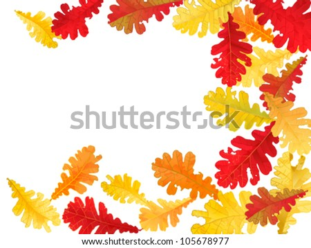autumn background with oak leaves with space for text
