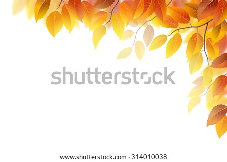 Autumn branches with leaves on white, vector illustration - stock vector