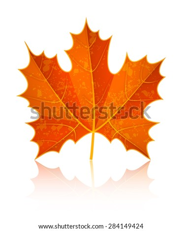 Autumn dry maple leaf. Eps10 vector illustration. Isolated on white background - stock vector