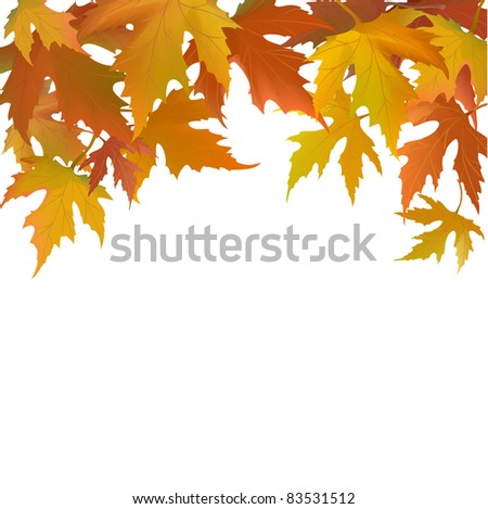 autumn   floral background with  leaflets