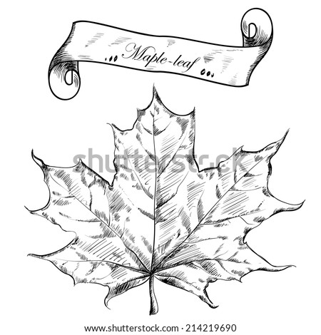 Autumn highly detailed hand drawn maple leaf. Vector EPS - stock vector