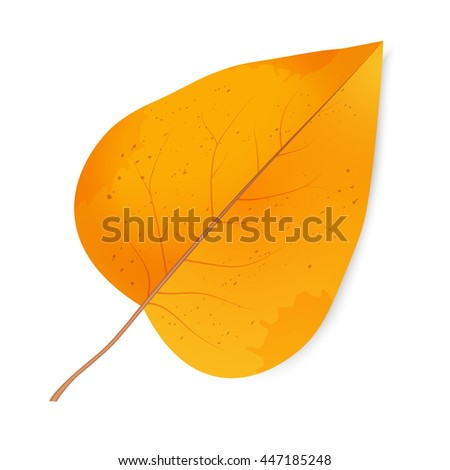 Autumn leaf. The foliage of lilac. First day of school. Change of seasons. Halloween. Bright design elements on a white background. Vector illustration.