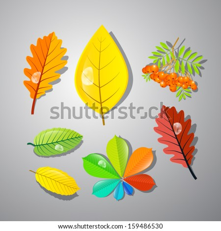 Autumn Leaves: Oak, Chestnut, Conker, Other Abstract Colorful Leaves and Rowan Berry - stock vector