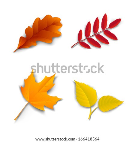 Autumn leaves set oak, maple, ash and birch vector illustration - stock vector