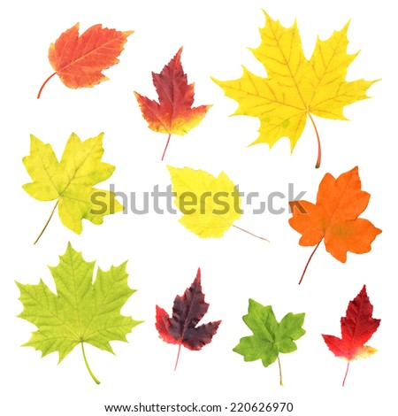 Autumn Leaves Set, Vector Illustration - stock vector