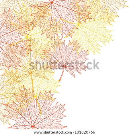 Autumn macro leaf of maple. Vector background.