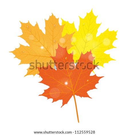 autumn maple leaves - stock vector