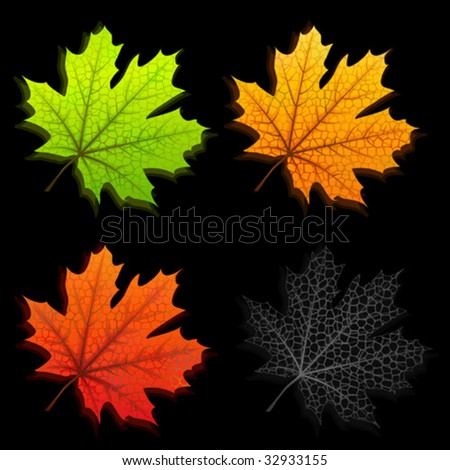 Autumn maple leaves isolated on black background