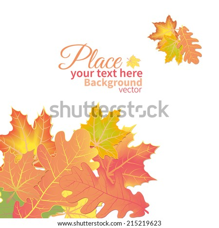autumn maple leaves scattered on white background