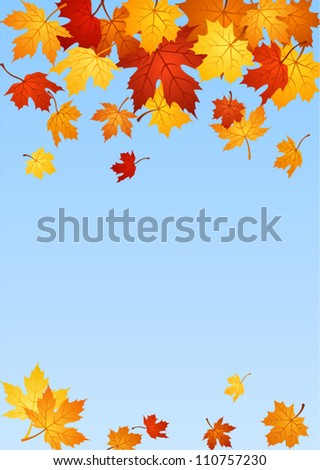 Autumn maple leaves. Vector illustration.