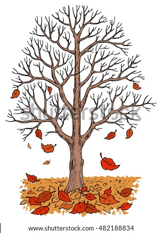 Autumn Tree Without Leaves - Fall Tree - Falling Leaves