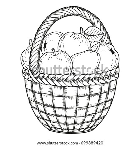Autumn Vector Coloring Page For Adults Black And White Background Silhouette Harvest Of Ripe