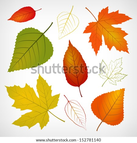 Autumn vector leaf illustration isolated from background - stock vector