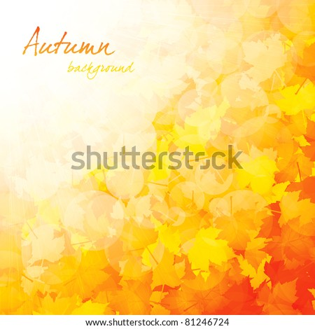 Autumnal leaf of maple and sunlight - stock vector