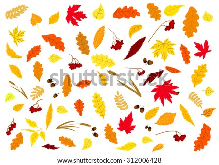 Autumnal leaves, herbs, acorns and berries set isolated on white. For holiday and seasonal design - stock vector
