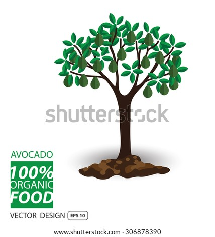 Avocado, fruits vector illustration. - stock vector