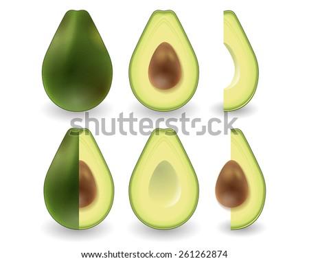 Avocado realistic vector set on white background - stock vector